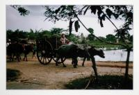 artists/Walters, Jack/thumb/Walters, Jack - Boy in Ox Cart.jpg